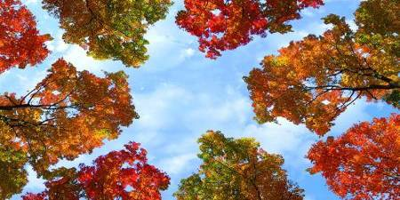 sky ceiling cloud light lens Item # Fall Trees ... Price $39.95 + S/H