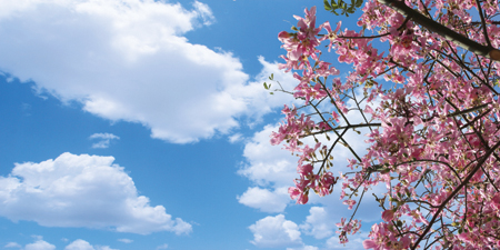 sky ceiling cloud light lens Item # Pink Bougainvillea Tree Sky Diffuser ... Price $39.95 + S/H